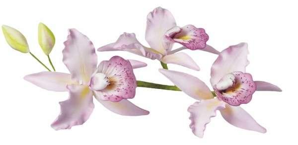 Ausstecher Cattleya Orchidee
