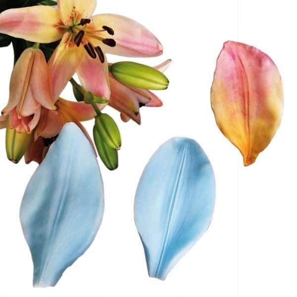 """Veiner """"Asiatische Lilie - Blütenblatt"""" (Asiatic Lily,Petal) ca.5 x 10 cm"""
