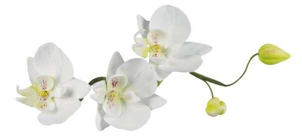 Ausstecher Orchidee